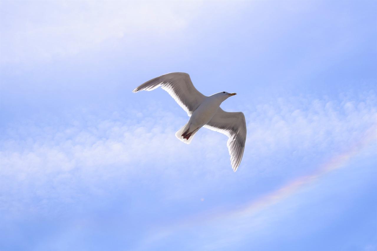 seagull-1879672_1280