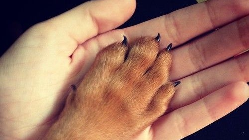PHOTO OP_ A Paw in Hand Via ivanaturi_ Cropped